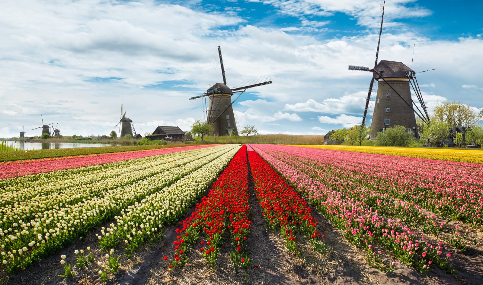 Day Trip from Amsterdam: Windmills & Tulips